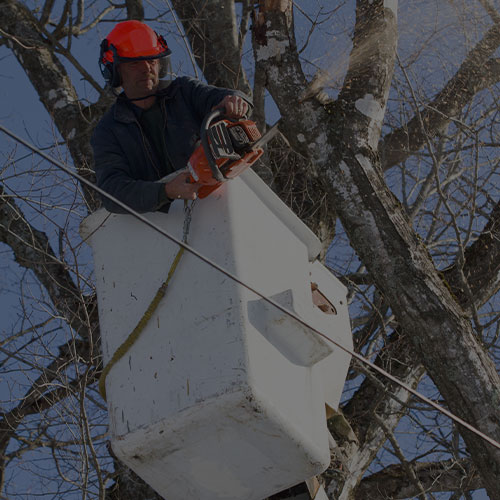 man in a pole box truck trimming higher up limbs in a tree