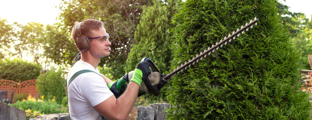 man trimming shrubs with a hedger