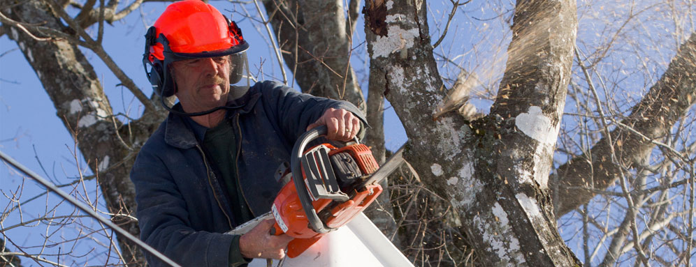 Man in a tree cutting down limbs with a chain saw