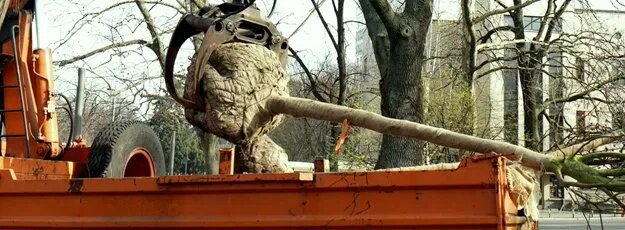 machine grabbing a tree that is being transplanted