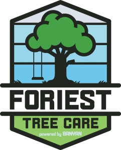 Tree with swing with the text Foriest Tree Care powered by Banyan
